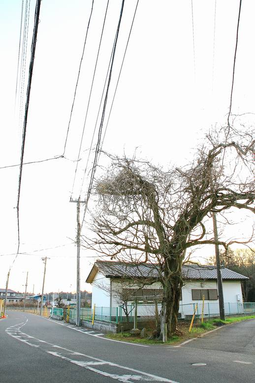 2012nabasamadouso01.jpg