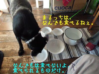 DSCN9605_XX.jpg