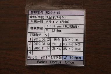 ♂飼育管理表