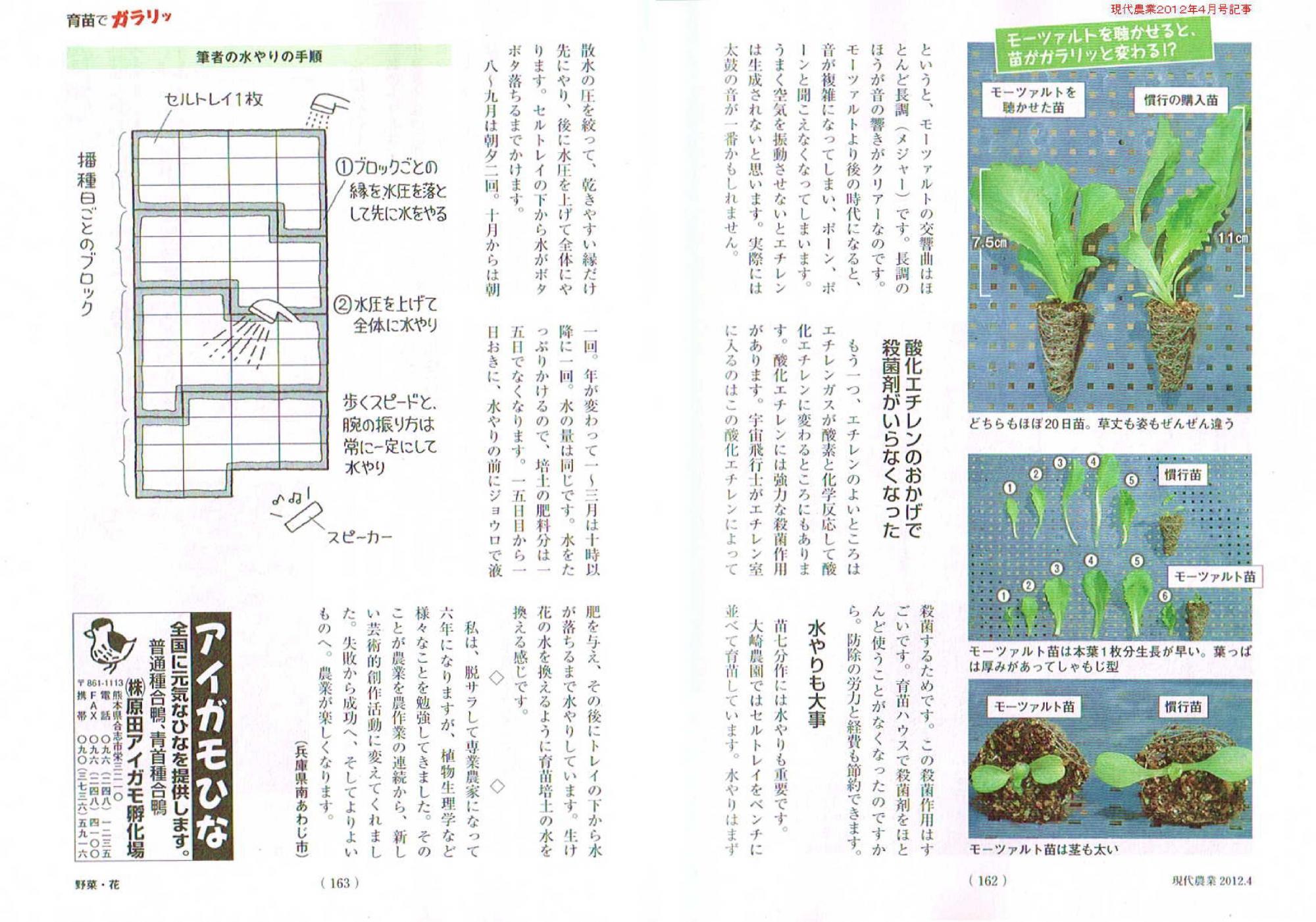 大崎農園の野菜たち