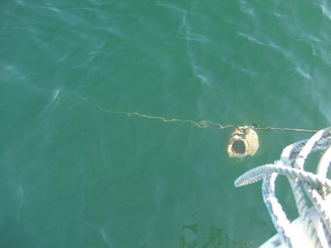 2012タコ海中から