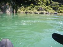 仁淀川渦ポイントがありました