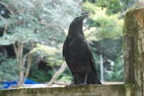 クローズっぽい鴉がいたり