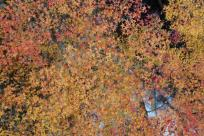 みたらい渓谷 紅葉1