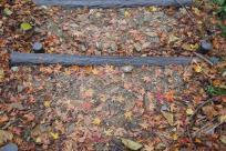 みたらい渓谷 紅葉3