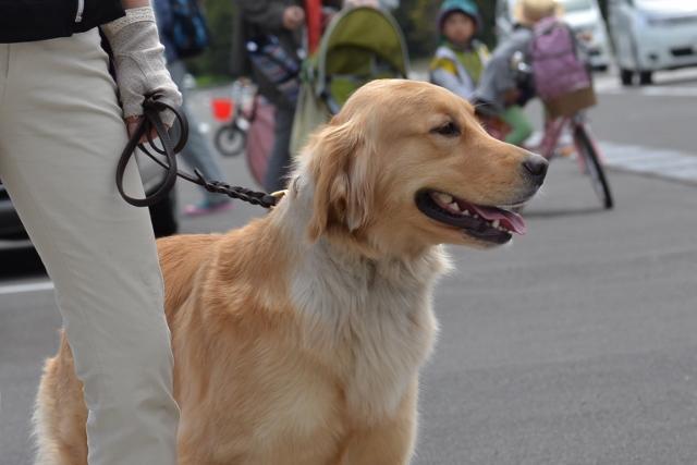 2013.5.18お散歩会7