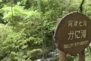 166 河津七滝 かに滝