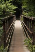 025 尾白川渓谷 吊り橋