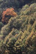 002 西沢渓谷 紅葉