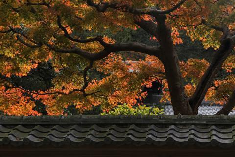 043 円覚寺