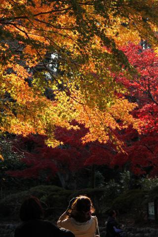097 源氏山公園
