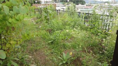雑草だらけの庭と家庭菜園