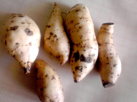 洗った生のベニイモ