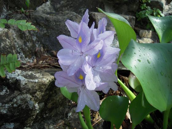 沖縄の草花(10月)