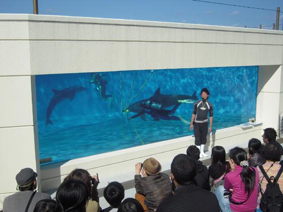 美ら海水族館 イルカとダイバーショー