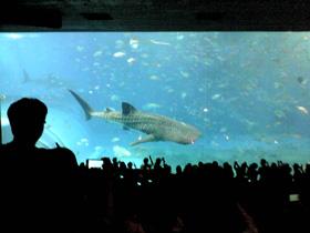 美ら海水族館 巨大水槽とジンベイザメ