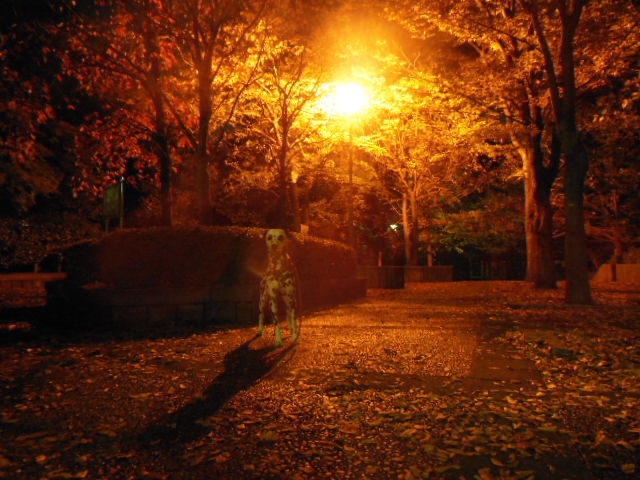 夜景 014