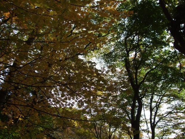 金剛山 紅葉