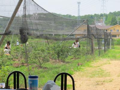 6/30(土)摘み取り園 2012