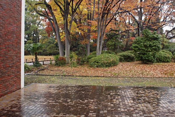 ていちゃん11月ー1秋雨に映える