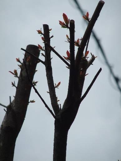 がんばる木