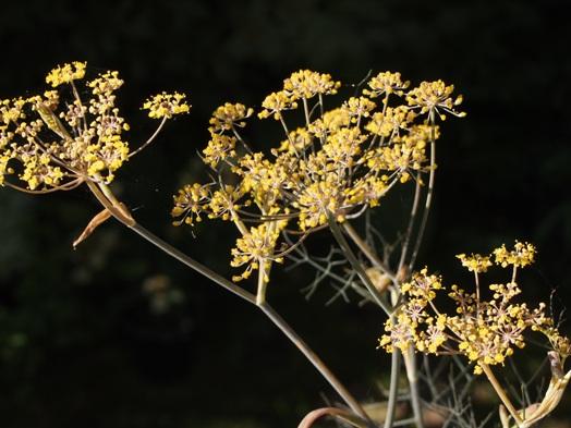 my-garden 014 (3)