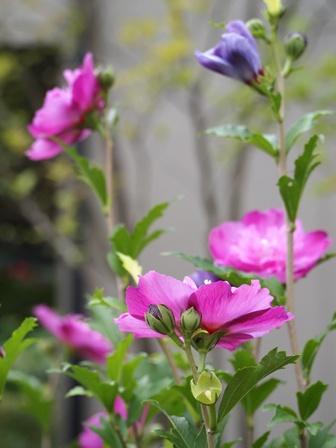 my-garden 009