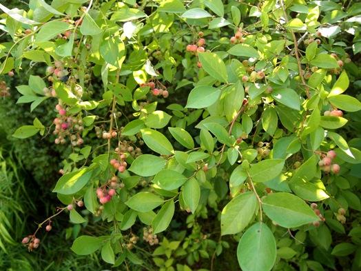 my-garden 063 (2)