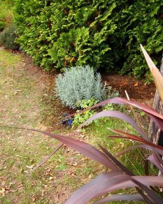 my-garden 083