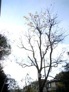 my-garden 004 (5)