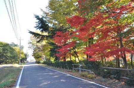 kouyou2012.jpg