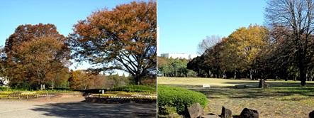 紅葉が色づく公園A-horz