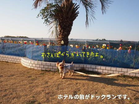 P3270632.jpg