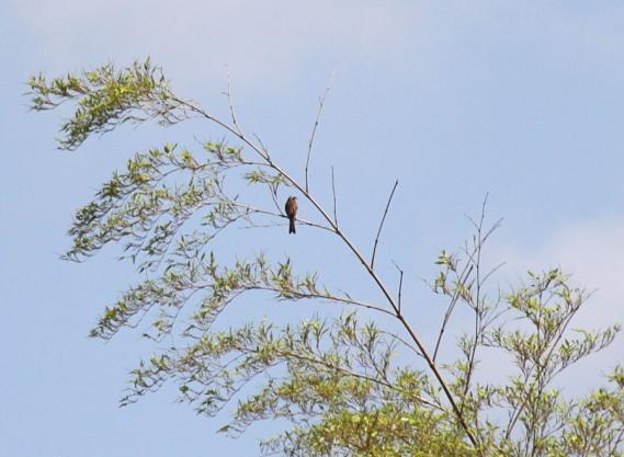 IMG_3369小鳥