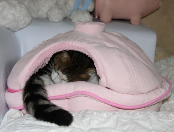 IMG_7933猫鍋