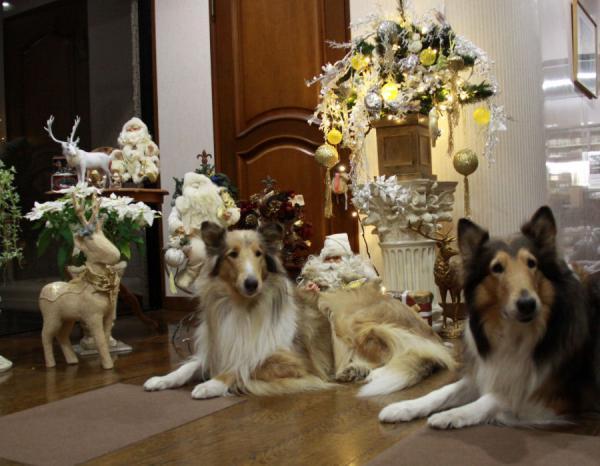 IMG_9427クリスマスイブ犬