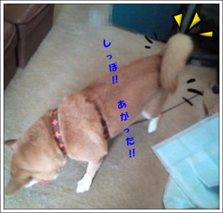 20121017092705.jpg