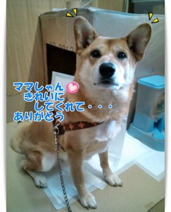 20121205ちこお礼