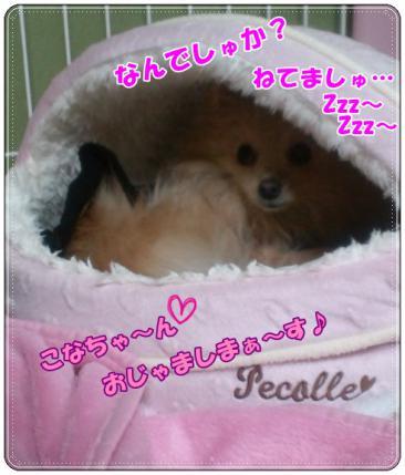 20121206ねてましゅ