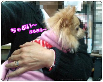 20121209ちゃぶい
