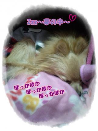 20121209ぽっかぽか