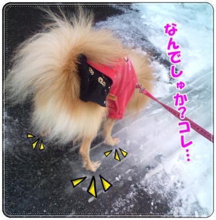 20121210なんでしゅか?
