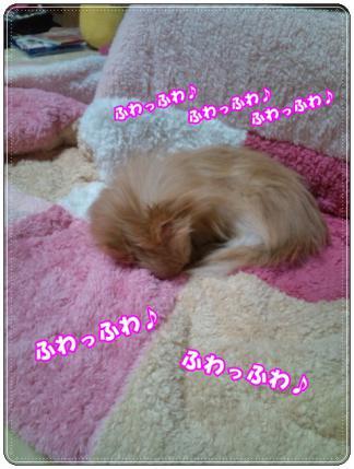 20121211ふわっふわ