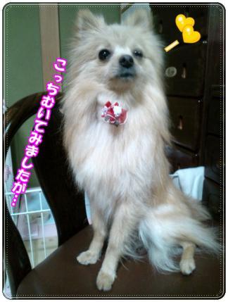 20121221よこむき2