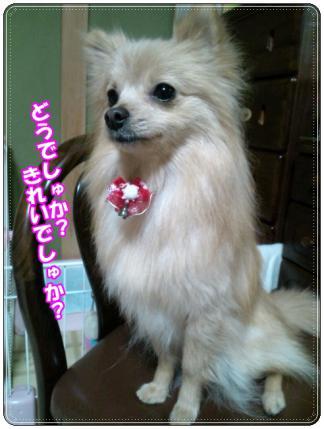 20121221よこむき1