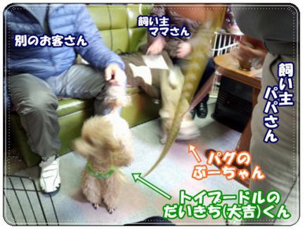 20130112①大吉ぶー