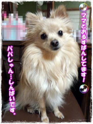 20130124ぱぱしんぱい