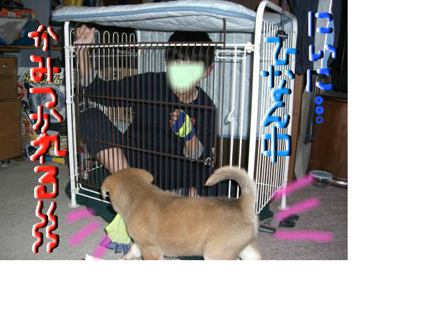 snap_pichichicocona_20125115489.jpg