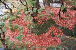 強羅公園紅葉