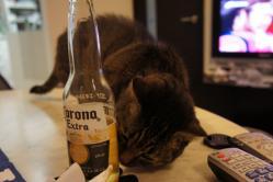 ムンチとビール